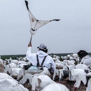 snow geese 17